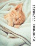 Stock photo little red kitten cat lies on the fluffy carpet at home little kitten sleeps close up of a 772986538