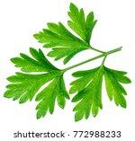 parsley herb. macro shot of... | Shutterstock . vector #772988233