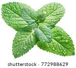 spearmint or mint leaves with... | Shutterstock . vector #772988629