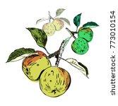 hand drawn fruit  apples in tree   Shutterstock .eps vector #773010154