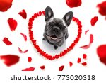french bulldog  dog in love for ... | Shutterstock . vector #773020318