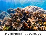beautiful colorful coral reef... | Shutterstock . vector #773058793