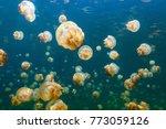underwater photo of endemic... | Shutterstock . vector #773059126