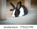 cute photo of black and white... | Shutterstock . vector #773121790