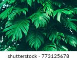 tropical jungle foliage  dark... | Shutterstock . vector #773125678