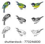 drawing of a bird of a titmouse ...   Shutterstock .eps vector #773246830