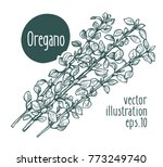 oregano branch. vector... | Shutterstock .eps vector #773249740