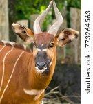 beautiful animal   big eastern... | Shutterstock . vector #773264563