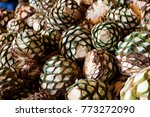 agave piles in distillery... | Shutterstock . vector #773272090