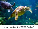 Small photo of Sea turtle seen at the Aquarium de la Guadeloupe - Le Gosier
