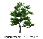 isolated trees on white... | Shutterstock . vector #773296474