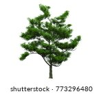 isolated trees on white... | Shutterstock . vector #773296480