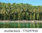 Tropical Coastline Coconut Pal...