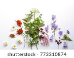 floral background with... | Shutterstock . vector #773310874