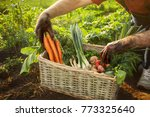 man picking carrot and tomato... | Shutterstock . vector #773325640
