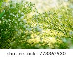 white cutter flower can be used ... | Shutterstock . vector #773362930