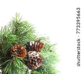 green pine christmas tree green ...   Shutterstock . vector #773395663