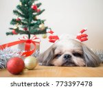 lazy dog on christmas... | Shutterstock . vector #773397478