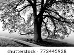 landscape with a beautiful old... | Shutterstock . vector #773445928