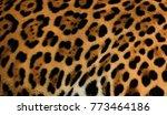 Real Jaguar Fur For Background...