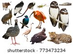 set of  south american animals. ... | Shutterstock . vector #773473234