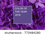 trendy color concept of the... | Shutterstock . vector #773484280