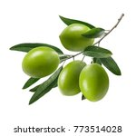 green olive branch isolated on... | Shutterstock . vector #773514028