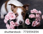 A Dog With Flowers. Pets Of St...