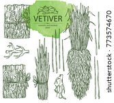 collection of vetiver  root and ... | Shutterstock .eps vector #773574670