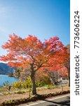 red tree beside the lake   Shutterstock . vector #773606224