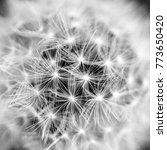Small photo of dandelion closeup, details and macro of a taraxacum flower