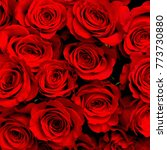 Stock photo red natural roses background close up 773730880
