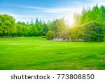 beautiful outdoor woods and... | Shutterstock . vector #773808850