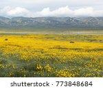 massive wildflower bloom at... | Shutterstock . vector #773848684