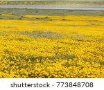 massive wildflower bloom at...   Shutterstock . vector #773848708