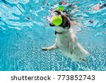 Small photo of Playful jack russell terrier puppy in swimming pool has fun. Dog jump, dive underwater to fetch ball. Training classes, active games with family pets. Popular canine breeds activity on summer holiday
