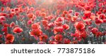Panorama With Red Poppies ...