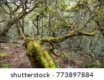 amazing tropical forest with... | Shutterstock . vector #773897884