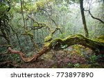 amazing tropical forest with... | Shutterstock . vector #773897890