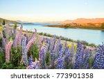 lake tekapo landscape and lupin ... | Shutterstock . vector #773901358