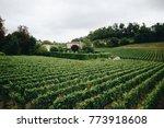 beautiful vineyards in summer... | Shutterstock . vector #773918608