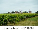 beautiful vineyards and old... | Shutterstock . vector #773918680