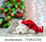 Stock photo baby kitten and samoyed puppy in red santa hat with gift box on a background of the christmas tree 773921734