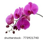 Beautiful purple phalaenopsis...