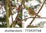 a winter scene of a stunning... | Shutterstock . vector #773929768