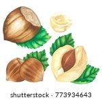 hazelnuts object watercolor... | Shutterstock . vector #773934643