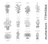 set of house indoor plant line... | Shutterstock .eps vector #773945866