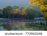 scenery of the autumn marsh in... | Shutterstock . vector #773963248