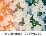 white hydrangea flower.... | Shutterstock . vector #773996110