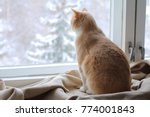 A Red Cat Sits On A Rug At The...